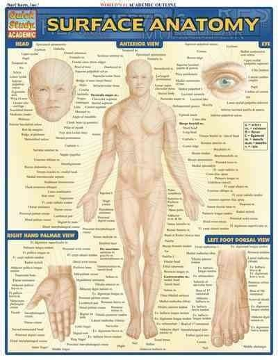 Surface Anatomy Quick Reference Guide | Products | Pinterest ...