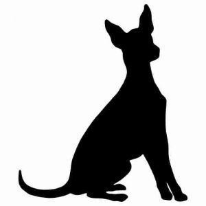 Aufkleber Hund Xolo 4 Xoloitzcuintli Beauty Xolos Perro