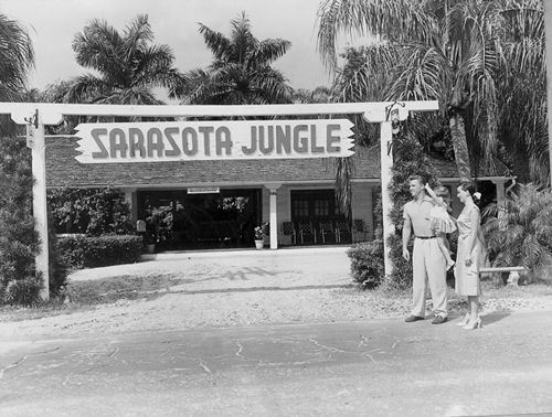 Vintage Sarasota Sarasota Jungle Gardens Blogs Vintage Sarasota
