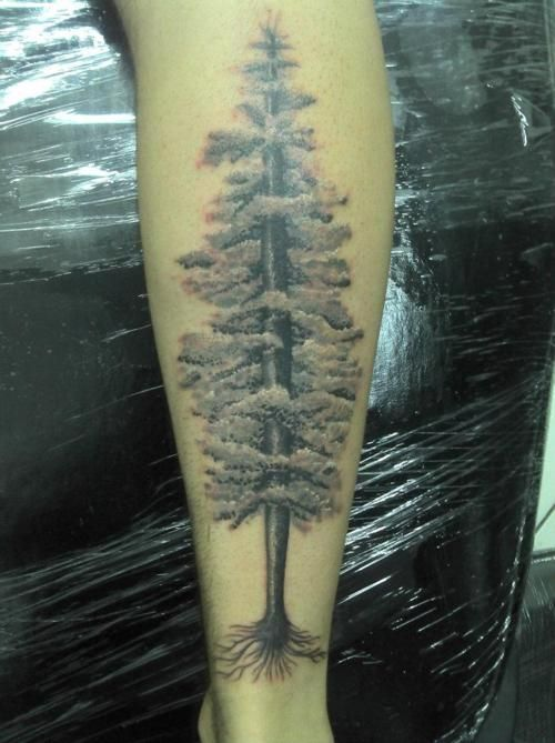 Redwood Tree Tattoo Meaning Incorruptibility Protection