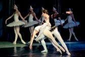 Ballet_dancer : Tour of Classical Grand Ballet - Stars of the St  Petersburg Ballet Theatre