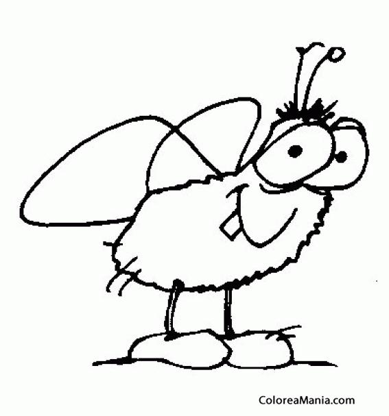 colorear mosca infantil insectos dibujo para colorear gratis ...