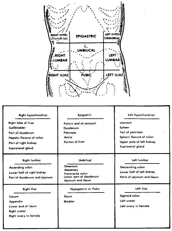 Diagram Of The Abdomen Koibana Info Anatomie Des Organes Anatomie Corps Humain Anatomie Du Corps