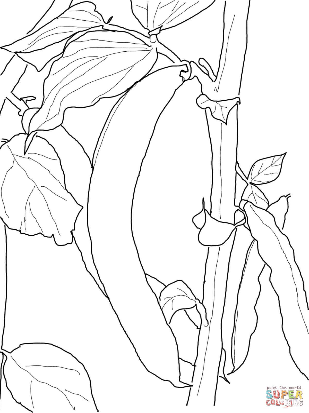 Green Beans Coloring Page Happy