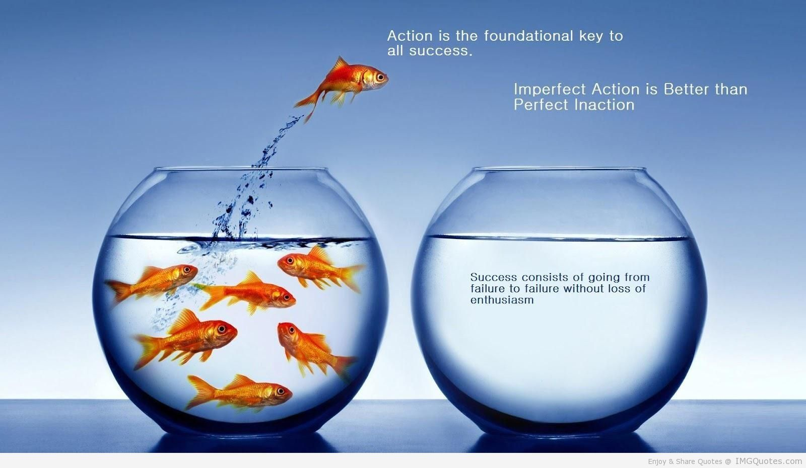 Great Quotes About Success Great Success Fish Quote  What Inspires Me  Pinterest  Success