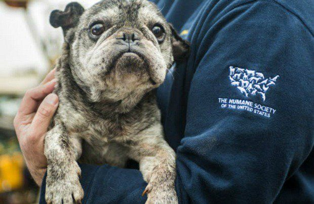 Humane Society Rescues 60 Dogs From Cruelty Case in