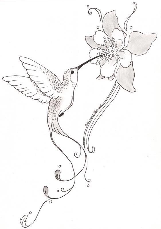Colibri, aquilega, dessin   Tatouage Colibri   Pinterest   Libélulas ...