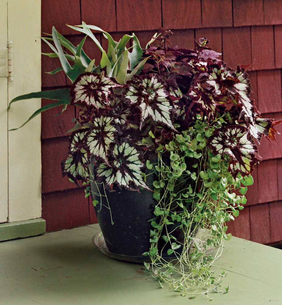 Designing Containers for Shade -- October Issue 159 - Page ...