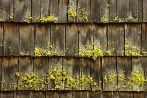 Best Pin By Oscar Cruz On Olans Cool Tree Houses Wood Shakes 400 x 300