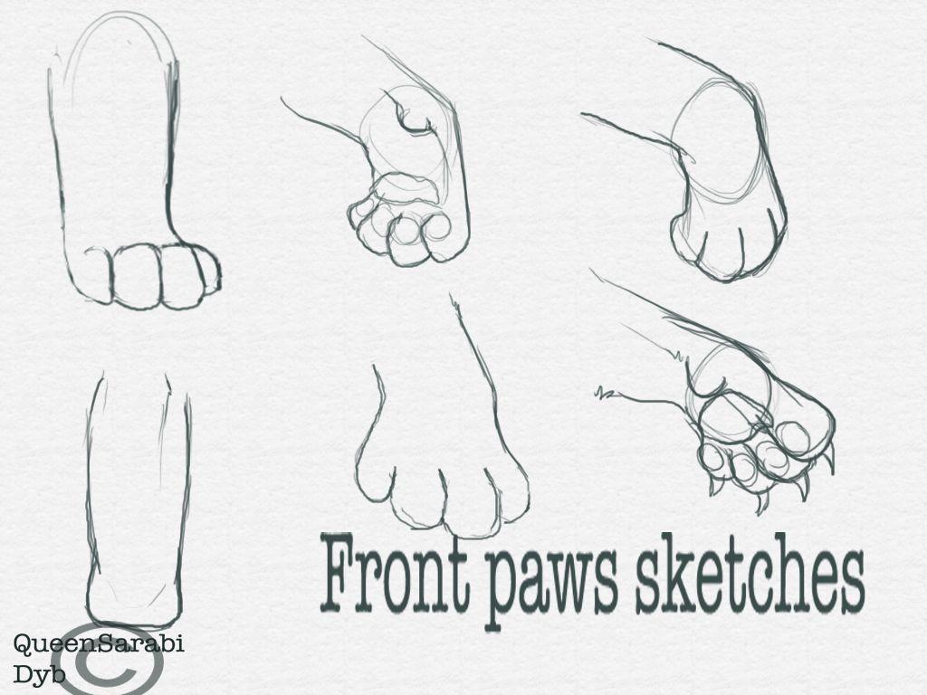 Front Paws Sketches by dyb on DeviantArt | Art Tutorials | Pinterest ...