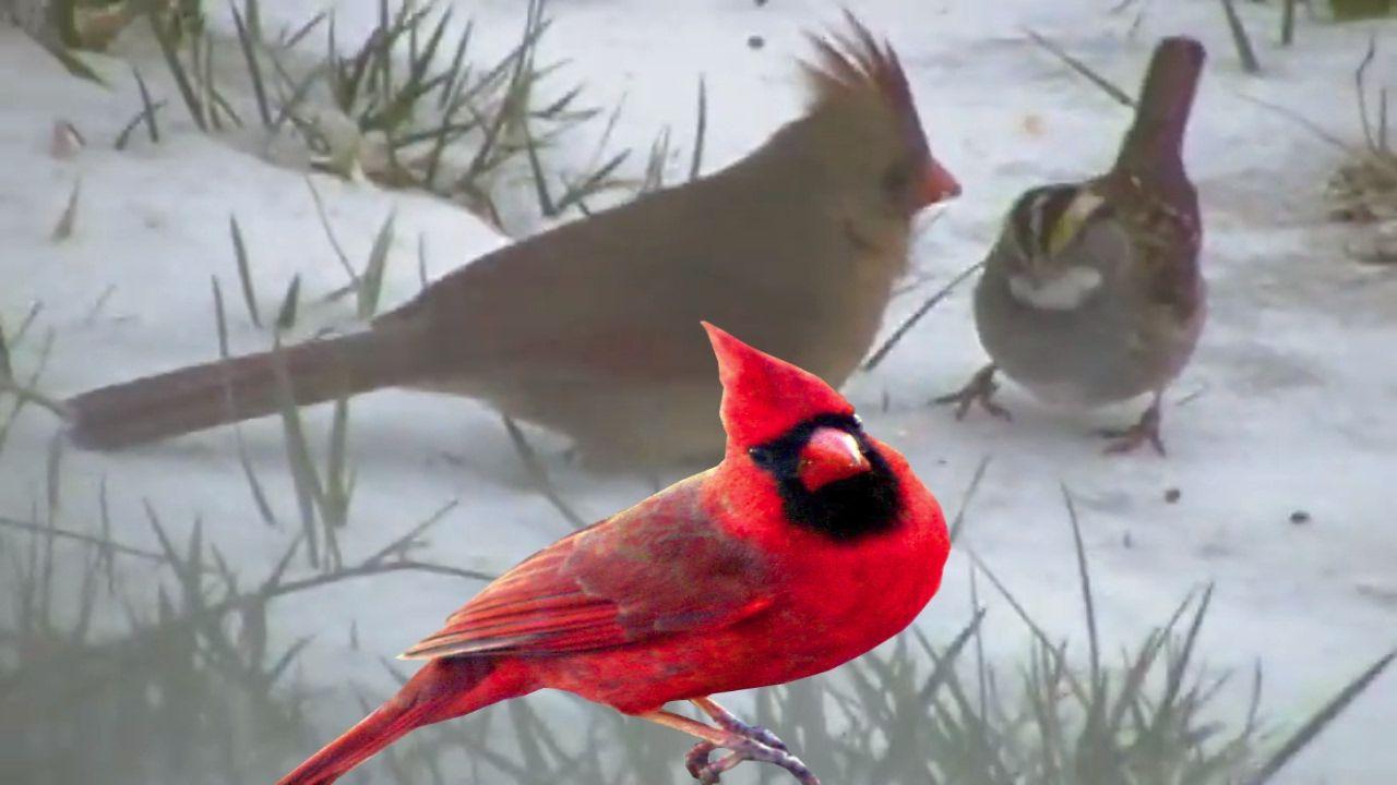 Let's Watch The Birds! Bird Watching!