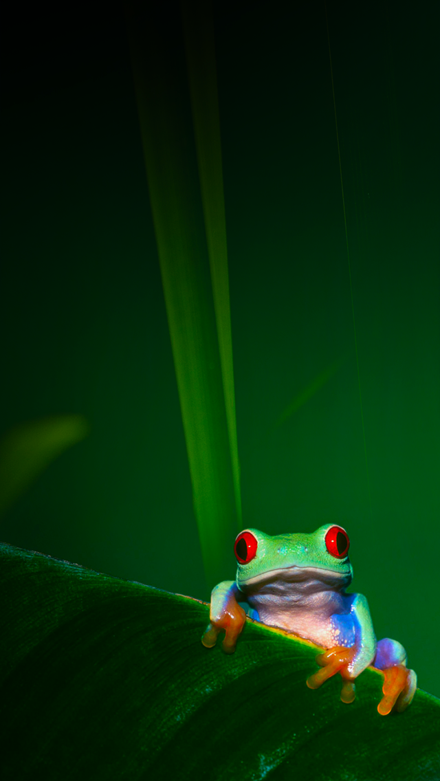 Tap And Get The Free App Art Creative Nature Frog Green Red Eyes Hd Iphone 5 Wallpaper Frog Wallpaper Iphone Wallpaper Abstract Wallpaper Backgrounds