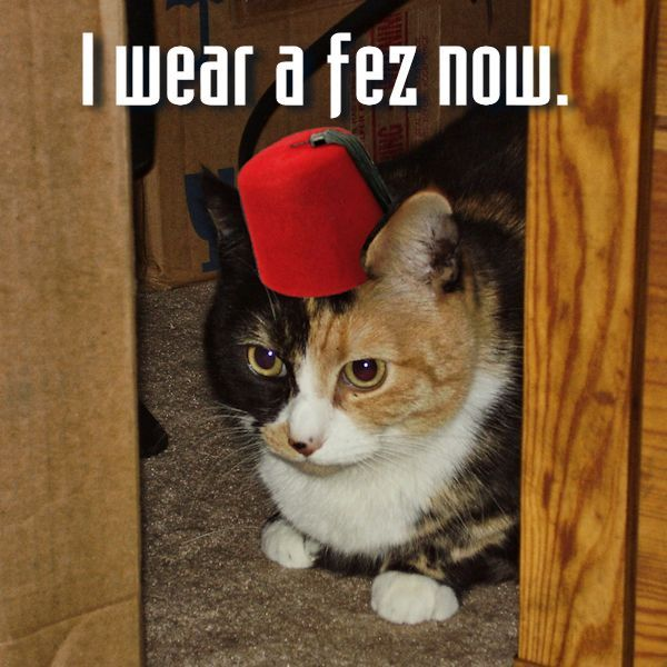 Pipper's a Doctor Who fan. She wears a fez now, because ... Fezzes Are Cool Cat