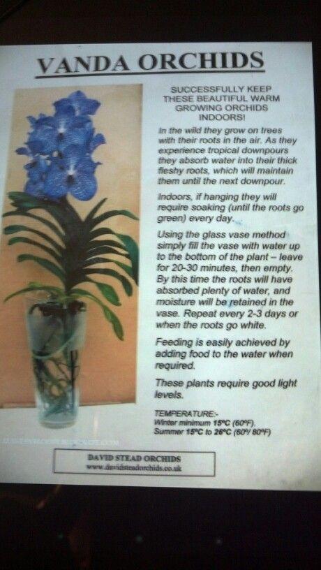 Growing Vanda Orchids In Glass Vases Houseplants Pinterest