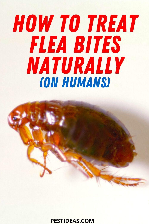 f19d54e726fa292a5e5edbe991b7f2d0 - How To Get Rid Of Flea Bites On People