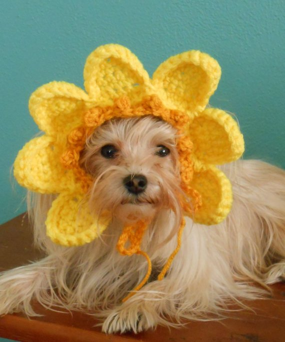 Crocheted Sun Hat for Cat or Dog b59f69dd1483