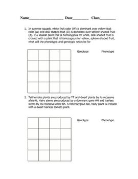 Dihybrid Cross Worksheet | Word problems, Worksheets and Genetics