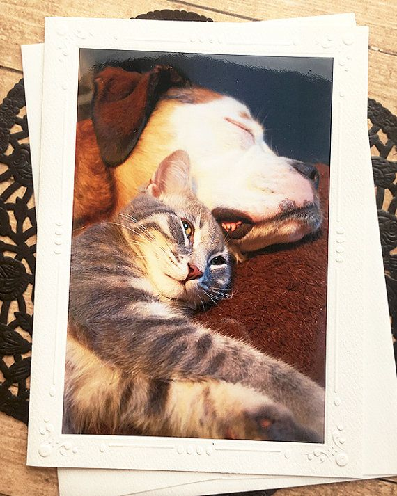 Unlikely Friends Fine Art Photography Card Pets Dog Cat Puppy