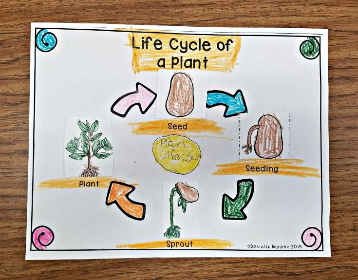 Plant Life Cycle Unit for Kindergarten First Second Grade ...