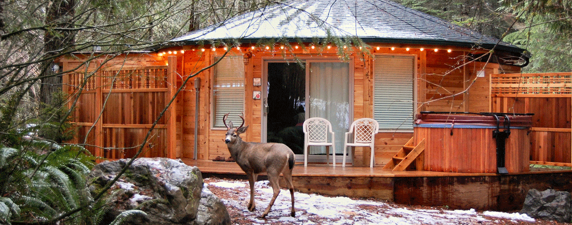 Mt Rainier Lodging Mount Rainier Cabins And Massage Day Spa Ashford Wa Mount Rainier Cabin Mt Rainier National Park National Park Lodges
