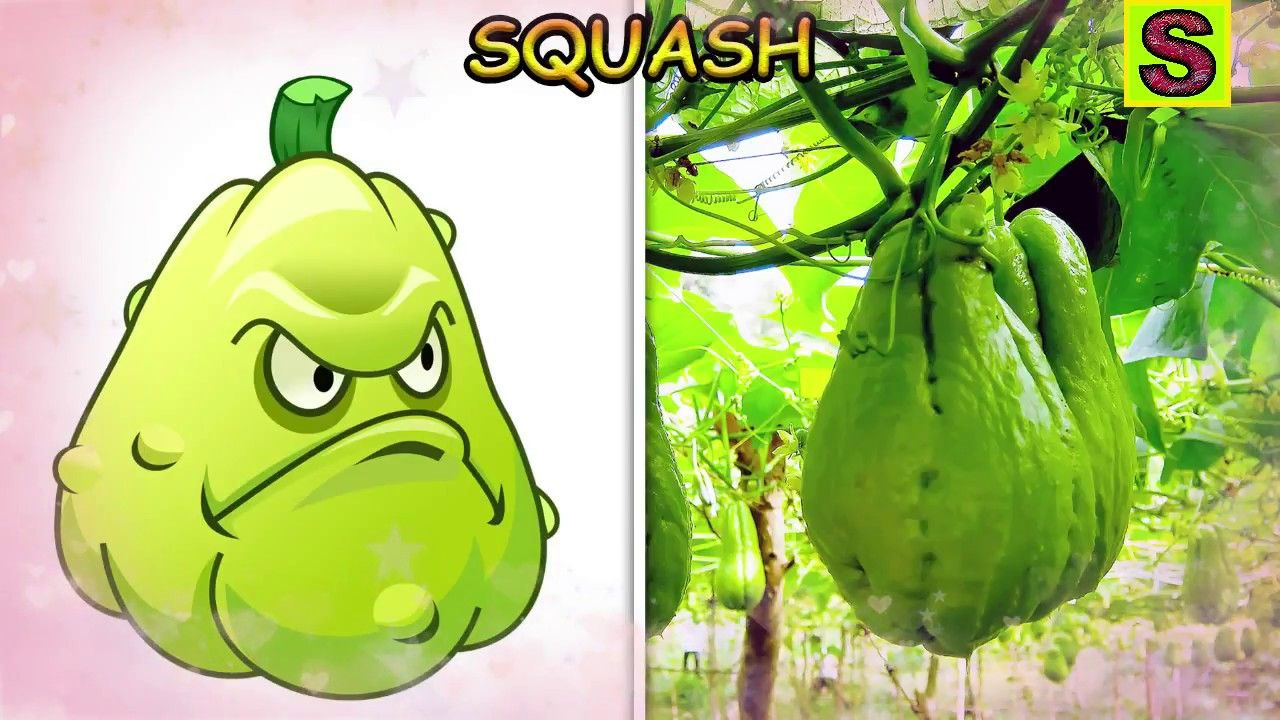 Plants Vs Zombies In Real Life All Plants And Characters