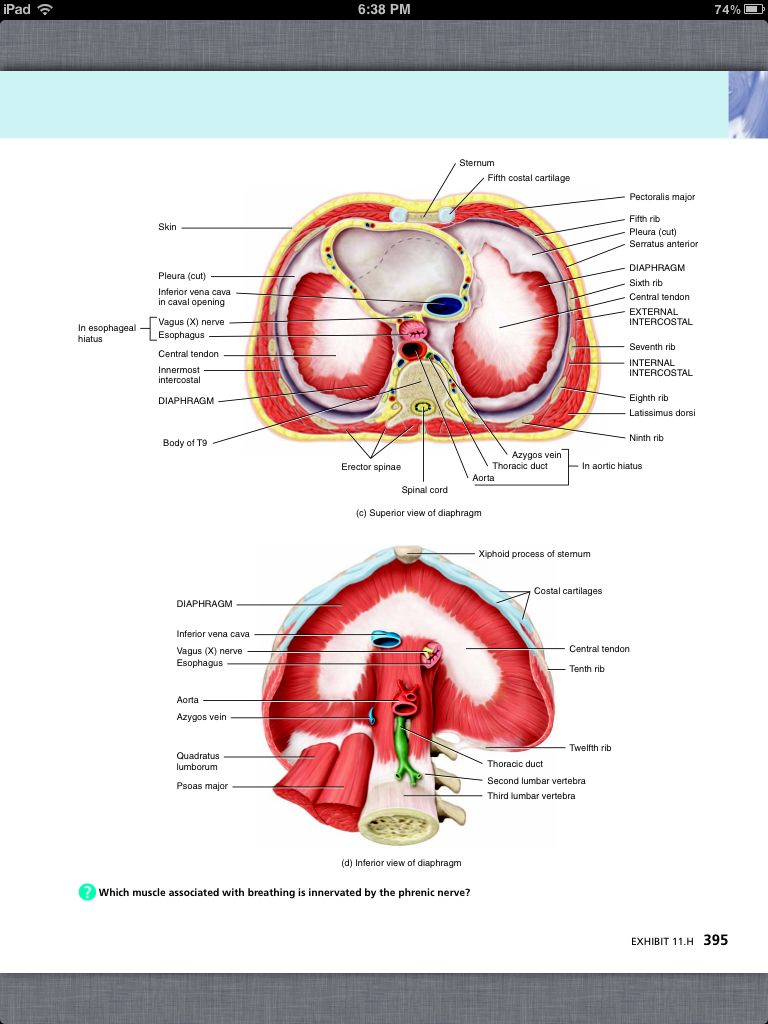 Principles of Anatomy and Physiology, Chapter 11, The Muscular System, 30, book pg 395