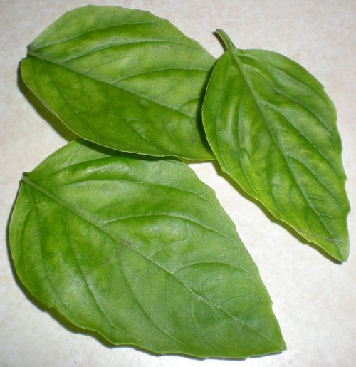 16 Fresh Basil Leaves, Torn Into Pieces In 2019
