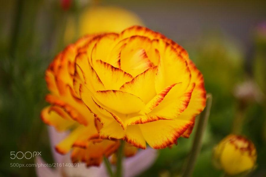 Flower red & yellow - kleine nette Blume