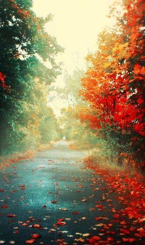 紅葉と道路のiphone壁紙 壁紙キングダム スマホ版 紅葉 壁紙 水彩 紅葉 秋 壁紙
