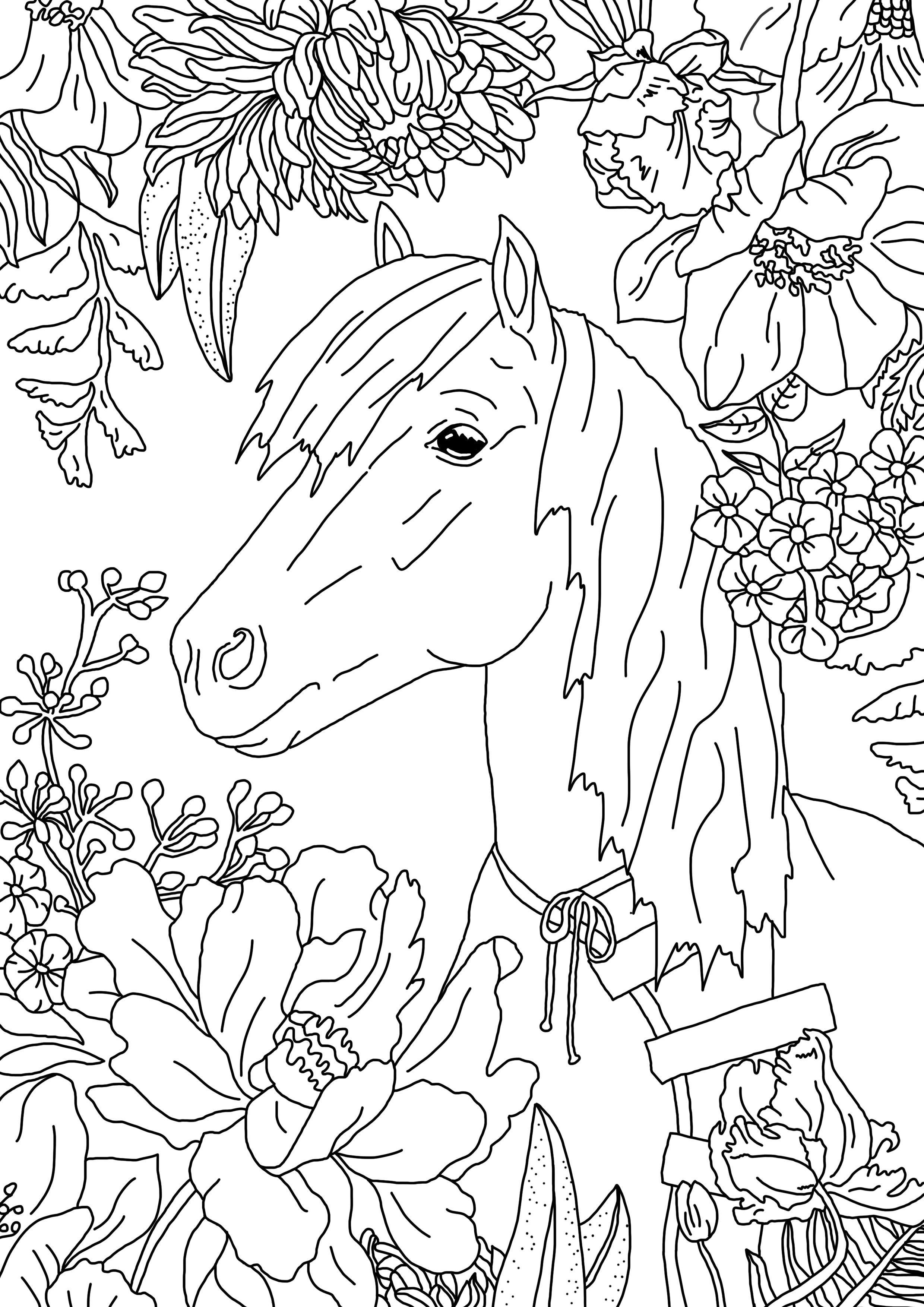 Ausmalbild Pferd  Ausmalbilder pferde, Ponys zeichnen