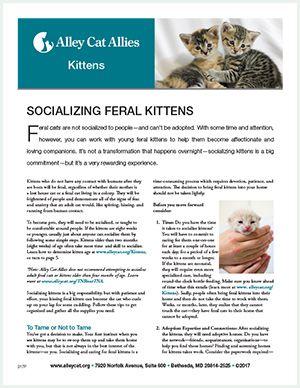 Socializing Kittens Fact Sheet Cover Feral Kittens Kittens Kitten Care