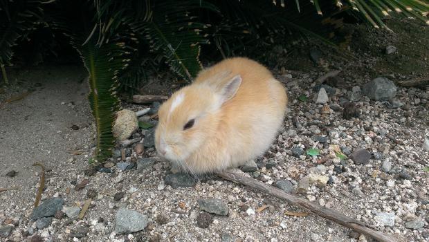 F Id Mizore515 20140408231845j Plain 子うさぎ うさぎ ウサギ