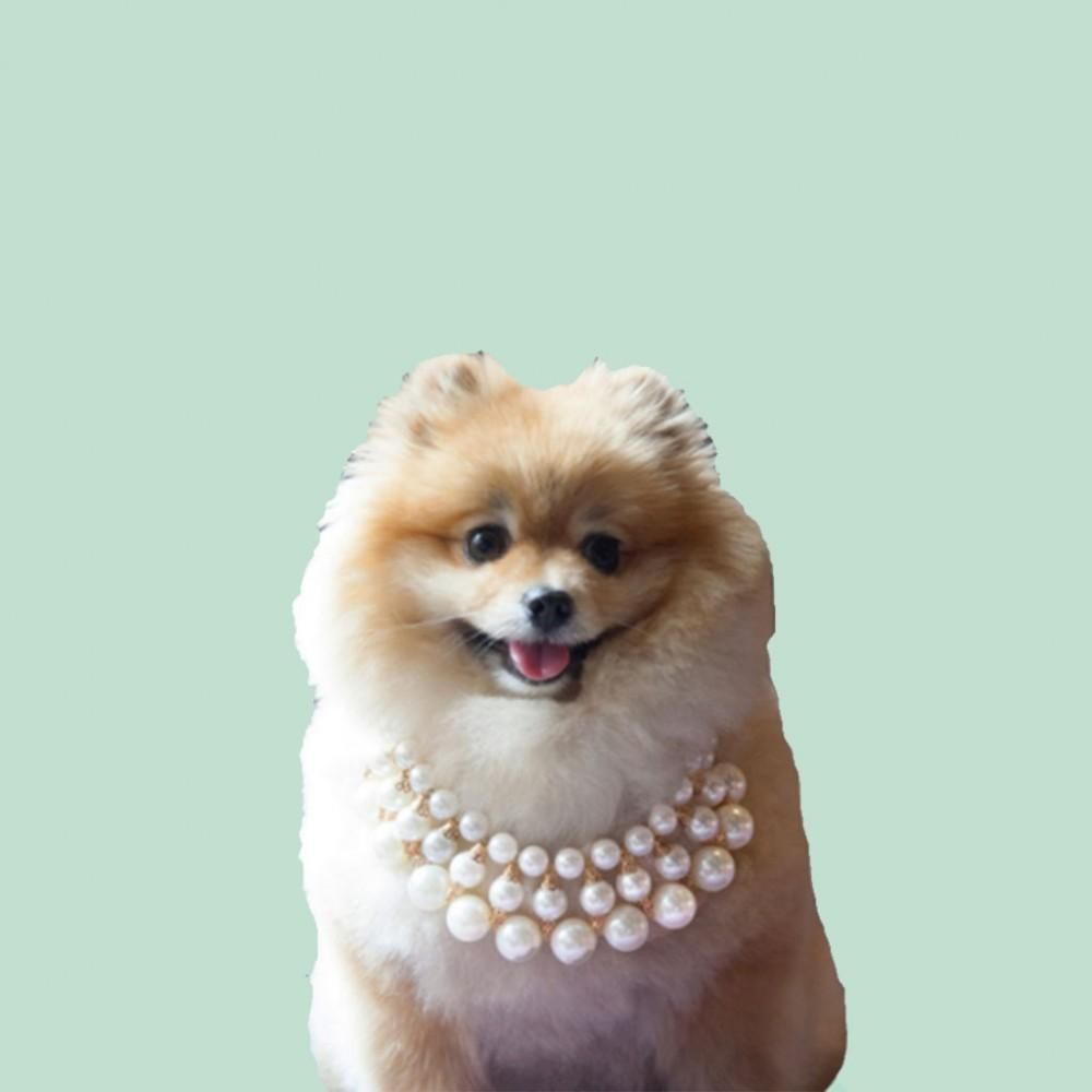Dubai Necklace Dog Jewelry Pet Fashion Cat Accessories