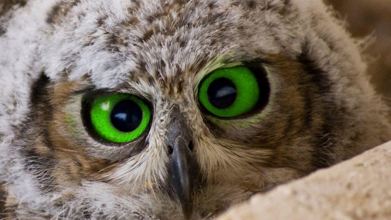 Posts About Bird Eye Color On Back Yard Biology Owl Owl Bird Animals