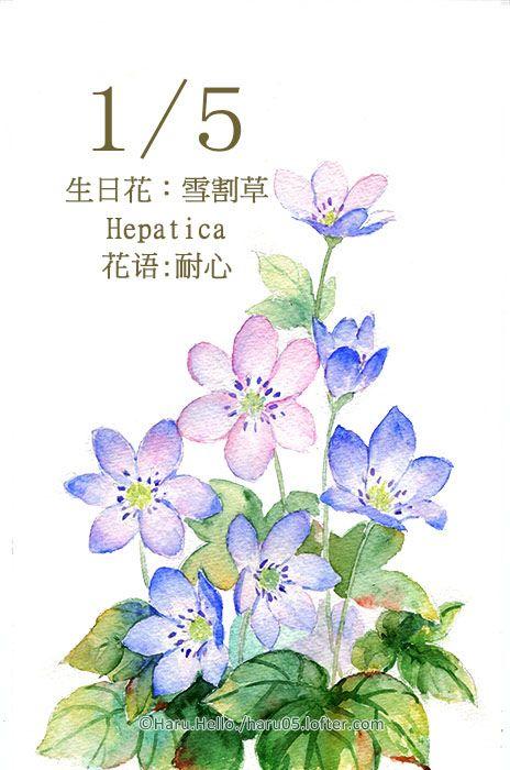 每日一花1 5 Haru Hello Watercolor Illustration Flower Drawing Floral Watercolor