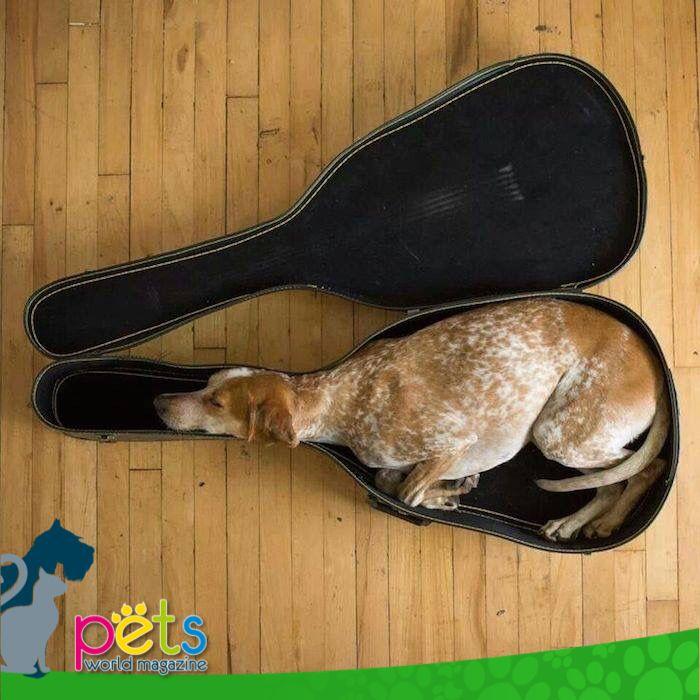 Buenas noches 🌛  #PetsWorldMagazine #RevistaDeMascotas #Panama #Mascotas #MascotasPanama #MascotasPty #PetsMagazine #MascotasAdorables #Perros #PerrosPty #PerrosPanama #Pets #PetsLovers #Dogs #DogLovers #DogOfTheDay #PicOfTheDay #Cute #SuperTiernos