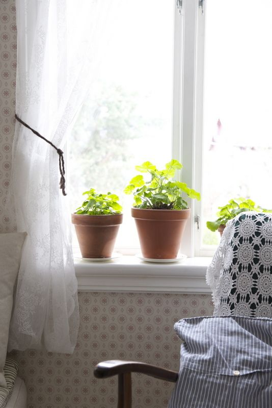 This looks like the window in my great grandfather Karl's house....love the white saucers