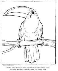 Animals Of Brazil Coloring Pages