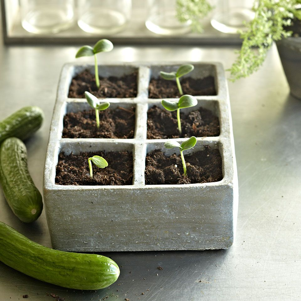 13 Easy To Grow Vegetables And Herbs Easy Vegetables To 400 x 300