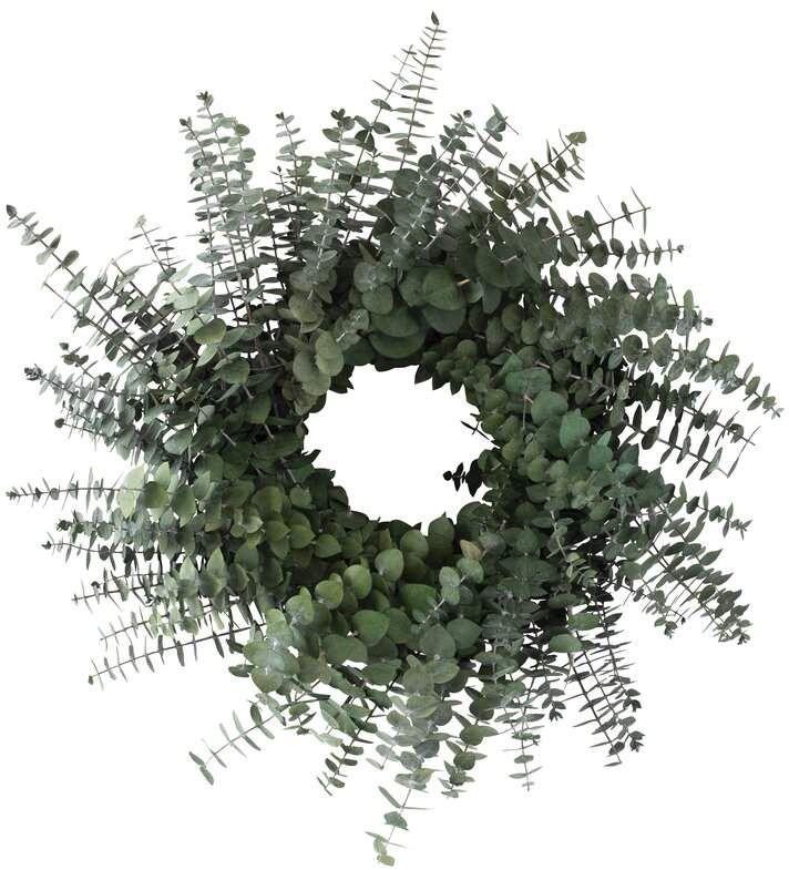 Photo of Preserved Baby Eucalyptus 18″ Wreath   Joss & Main