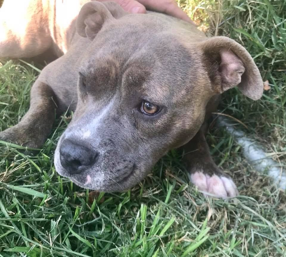 In The Play Yard Of The City Of San Bernardino Animal Control A Very Frightened Pup Literally Crawled Along The Fenced Lawn When In Her Kenn Pup Animal Rescue