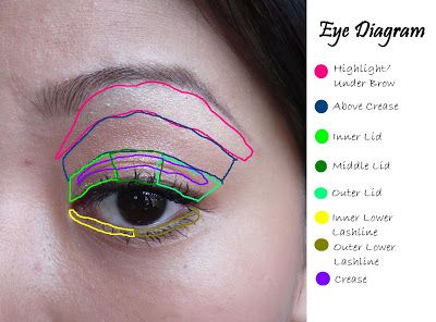 Eye diagram round eye makeup pinterest round eye makeup eye eye diagram ccuart Images