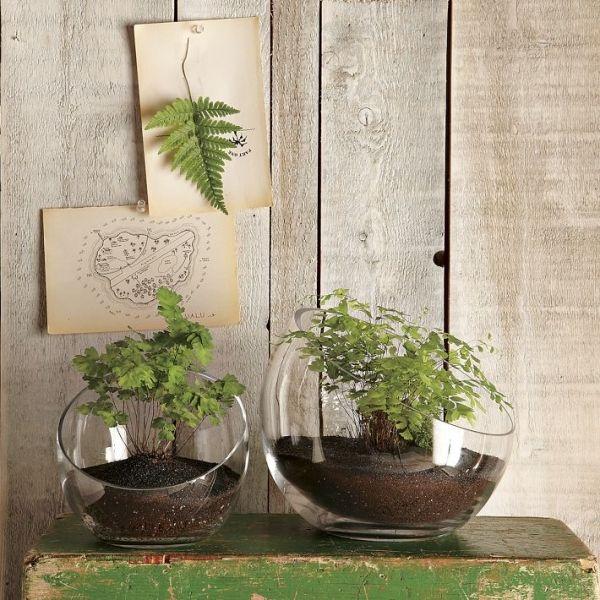 Indoor Garten terrarien pflanzen indoor garten pflanzen plants