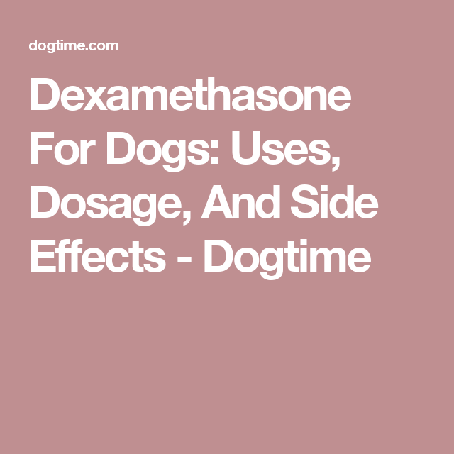 Dexamethasone For Dogs: Uses Dosage And Side Effects ...