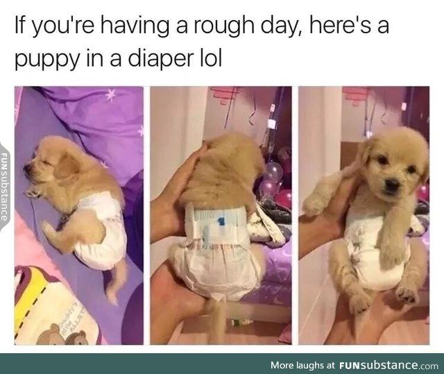 Funny Pics Memes And Trending Stories Puppy Diapers Cute Dog