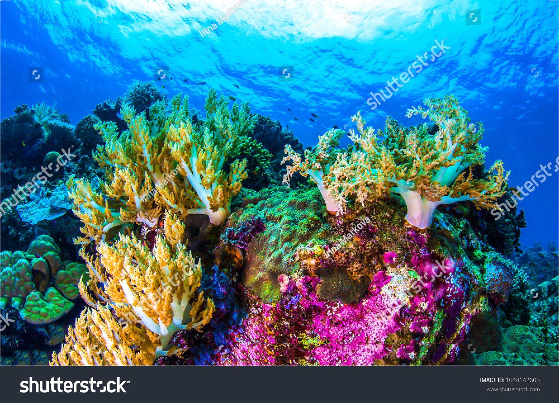 Underwater Coral Reef Sea View Landscapereef Coral Underwater Landscape Coral Reef Ocean Day Coral
