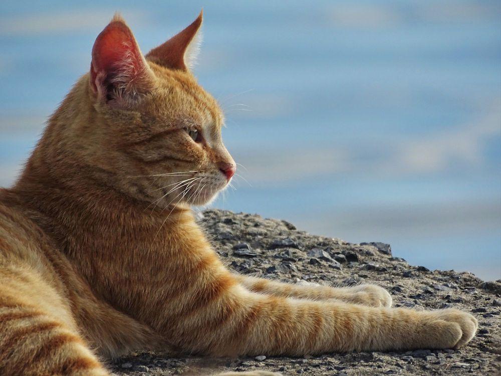 Cat 155 By Sabri Keleş On 500px Gatti
