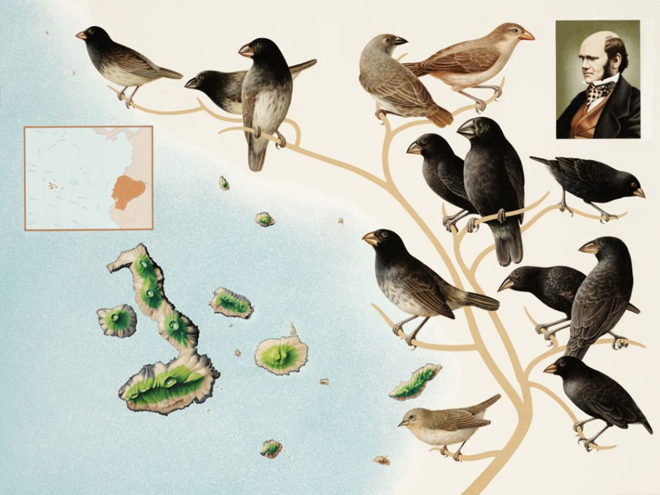 One Of Darwin S Finches Struggles To Survive Galapagos Islands