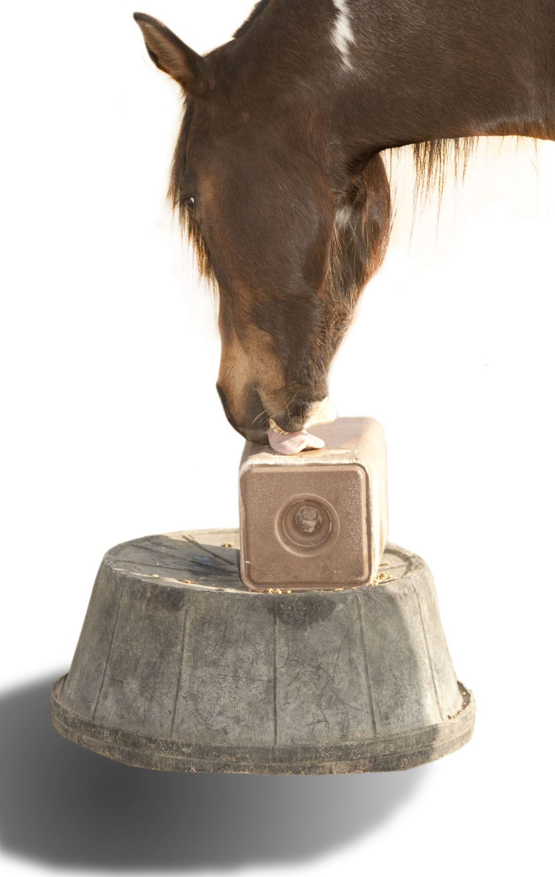 Check Your Salt Feeding Know How Horse Health Horses Diet Healthy Horses