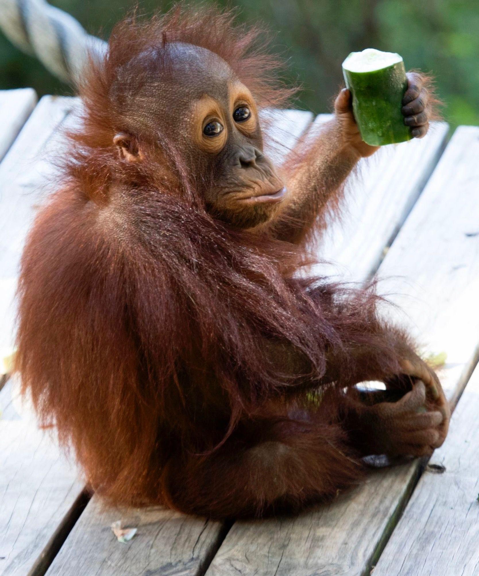 Pin von Iris Dell auf meg ulkig Affen baby, Bedrohte
